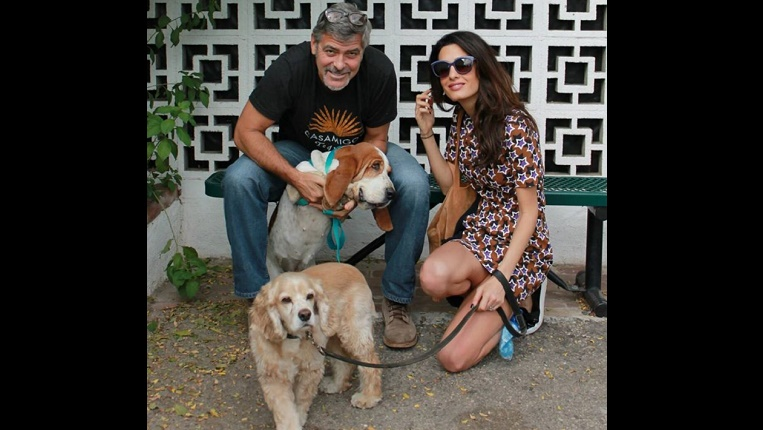 George Clooney sits holding Millie, a Basset Hound, while Amal Clooney kneels next to him holding the leash for Louie, a tan dog.