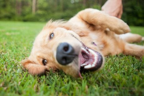 October Is Pet Wellness Month: 10 Tips For Doggie Wellness