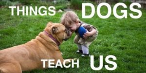 Things Dogs Teach Us [VIDEO]
