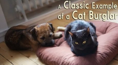 Dog's Reactions To Cats Stealing Their Beds [VIDEO]