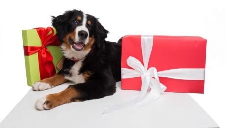 Holiday Gift Guide: Best Dog Accessories For 2017
