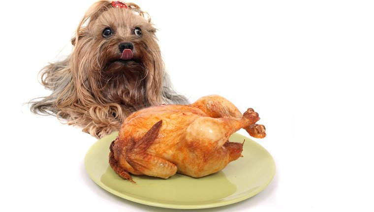 A small brown dog lies behind a Thanksgiving turkey licking her chops.