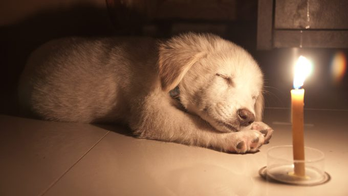 puppy lying near candle