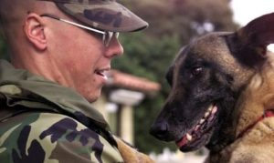10 Videos Of Dogs Welcoming Their Soldier Dads Home