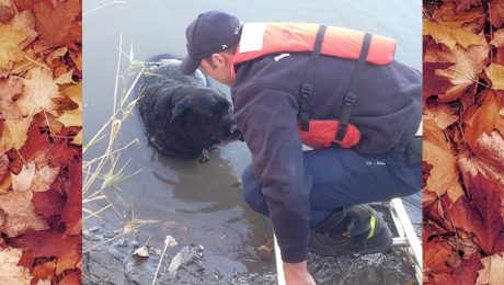 Dog Stuck Chest-Deep In Mud Rescued By Firefighters