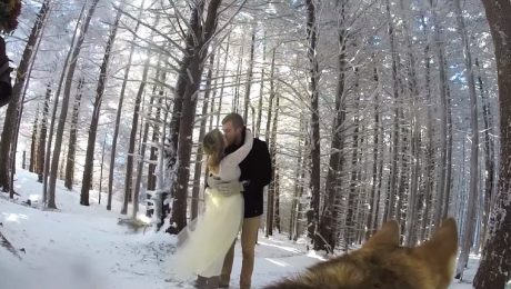 Siberian Husky Shoots Touching Wedding Video In The Snow