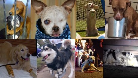 The Top 12 Most Inspirational Dogs Of 2015
