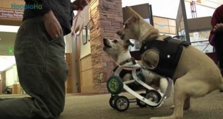 Kandu And Lucy: Armless Therapy Dogs [VIDEO]