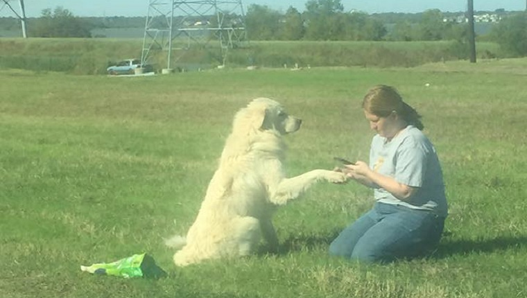 A large white dog holds his paw up for an animal advocate in the grass next to the road.