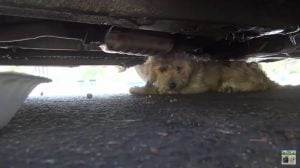Abandoned And Attacked This Dog Was Rescued And Found A Happy Ending [VIDEO]