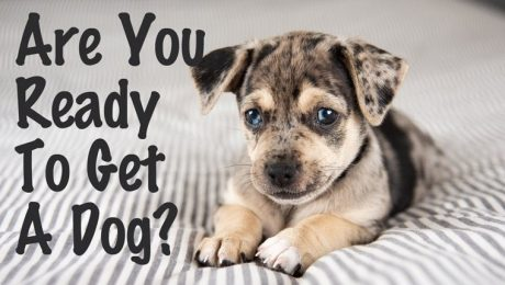 Are You Ready To Get A Dog? [VIDEO]