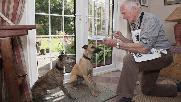 A senior man teaches two dogs to sit with treats and a clicker.