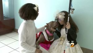 Twin Special Needs Girls Adopt Disabled Pit Bull For Christmas