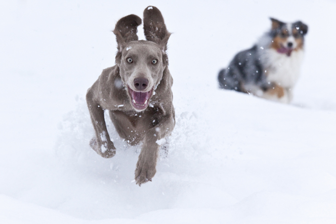 5 Dog Friendly Winter Resorts