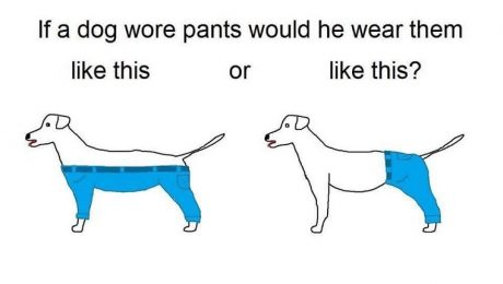 The Internet's Newest Ridiculous Debate: How Would A Dog Wear Pants?