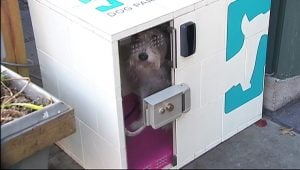 "Outdoor Kennel App Allows Owners To ""Park"" Dogs By The Minute"