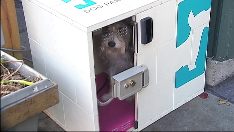 A dog waits in a box-like kennel with the Dog Parker logo on it.