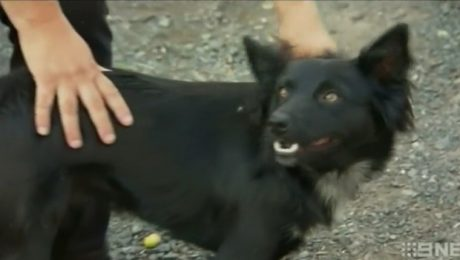 Dog Keeps Lost Toddler Safe And Barks For Rescuers To Find Them