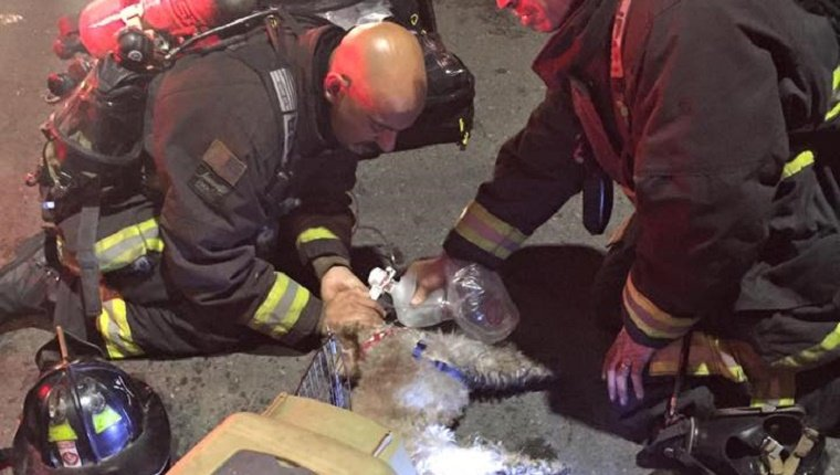 Two firefighters apply a breathing apparatus to the unconscious dog.