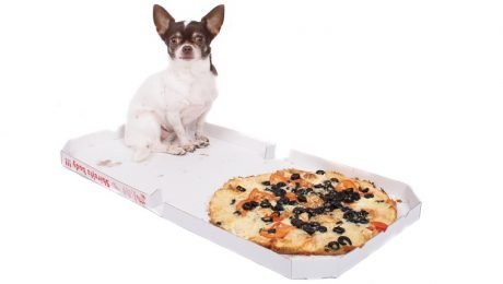 Dog Shoots The Pizza Delivery Guy With A Gun