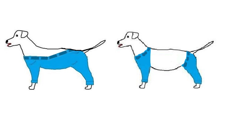 Two dogs have different designs of pants, one that covers all legs and some of the back, one that has two sets of pants, one for the front legs and one for the back.
