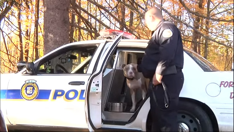 Kiah sits in a police car as her trainer pets her on the ear.