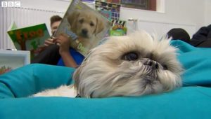 Therapy Dog Becomes Honorary School Teacher For Helping Students Read