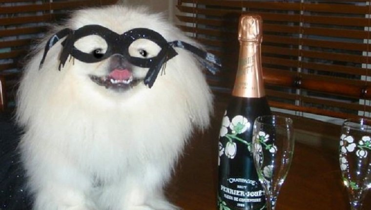 21 dogs ready to celebrate and ring in the new year