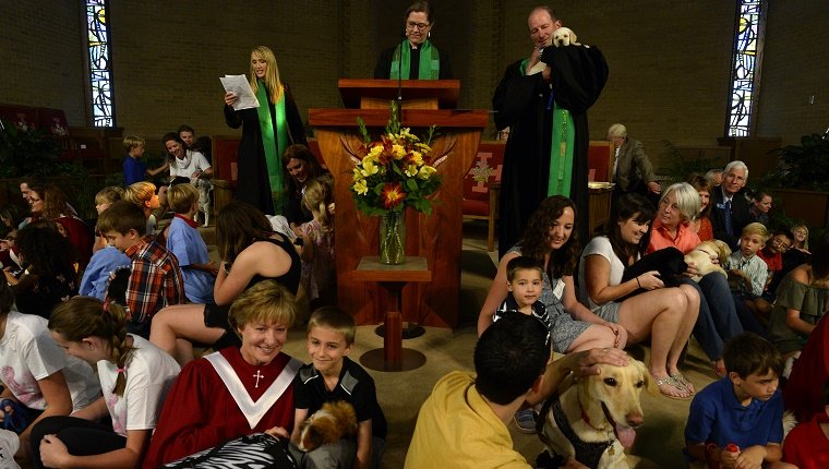 A church congregation has families and their pets surrounding the altar while a priest speaks.