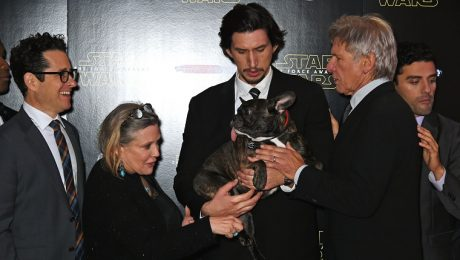 Carrie Fisher's Bulldog Crashes 'Star Wars' Premiere And Fights With Droid BB-8