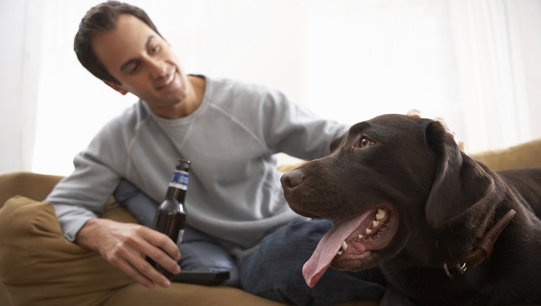 A man holds a bottle of beer on his sofa and pets a chocolate labrador.