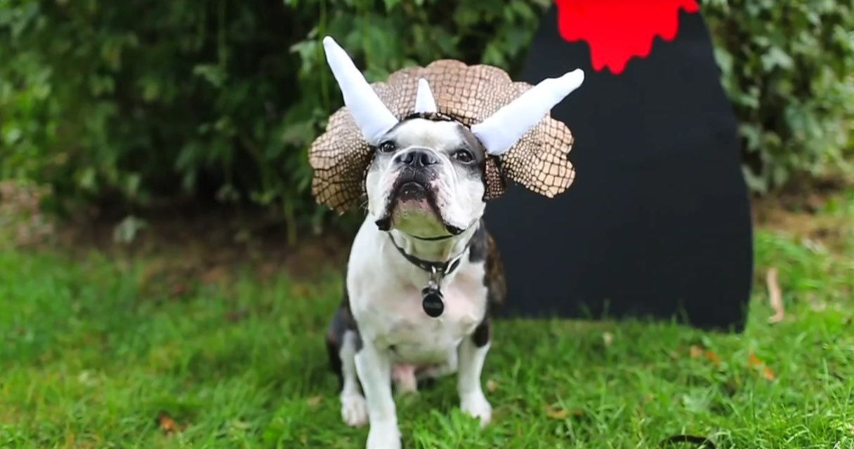 dog-diy-costumes