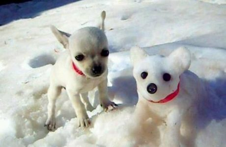 23 Awesome Dog Shaped Snowmen [PICTURES]