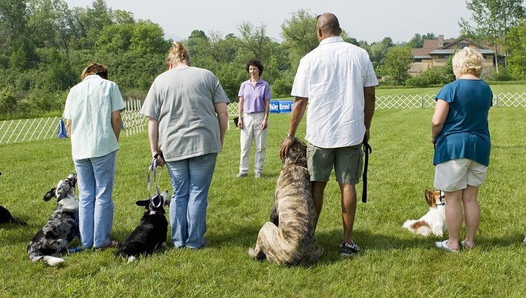 Several dogs stand next to their owners in a dog training class while an instructor gives directions.