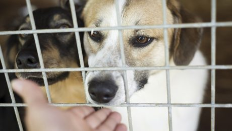 Former Volunteer Arrested For Putting Sweaters On Cold Shelter Dogs