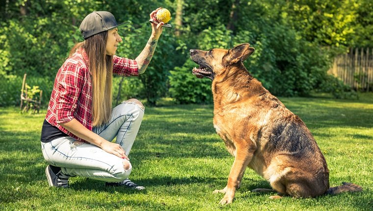 da1ad864cf3d0 10 Fun, Impressive Tricks You Can Teach Any Dog - Dogtime