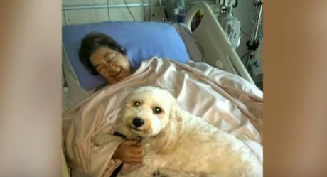 Pet Friendly Hospital Allows Dogs And Cats To Visit Their Humans In The Hospital