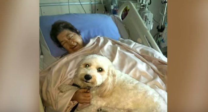Pet Friendly Hospital Allows Dogs And Cats To Visit Their Humans In The Hospital - Dogtime