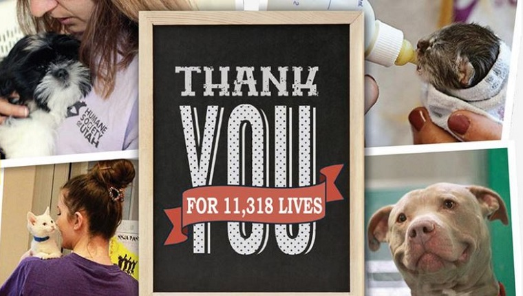 "A collage of animals being cared for with the words ""Thank You For 11,318 Lives"" in the foreground."