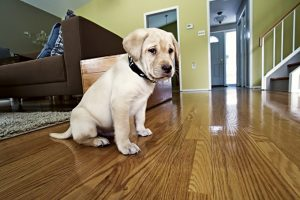 6 Things To Consider Before Bringing Home A New Furry Family Member