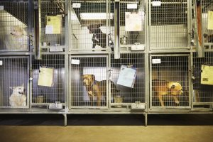Euthanasia In New York Shelters Drops 36% and Adoptions Are Up 17%