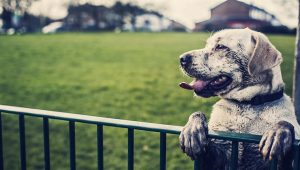 Behaviorists Say UK Dogs Are Getting Depressed Because Of Global Warming