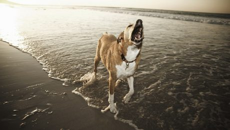 The Sound Of Dogs Barking Could Save The Ecosystem