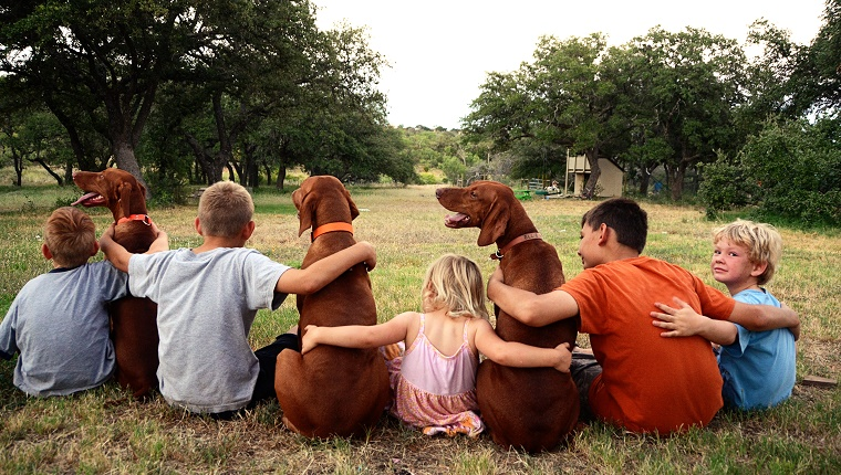 A group of kids sit with their arms around each other and three dogs.
