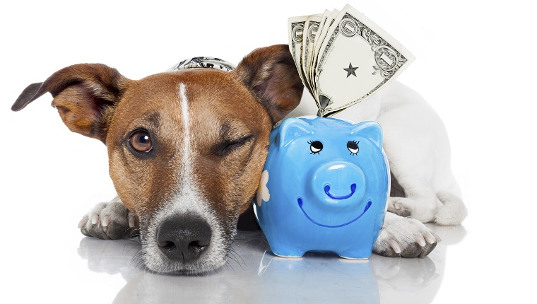 A dog lies next to an overstuffed piggy bank.