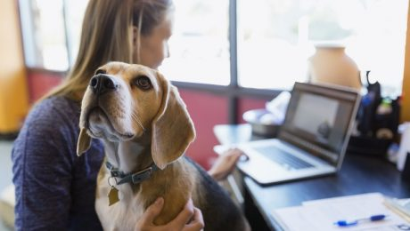 Professional Pet Sitters Week: 7 Ways To Say Thanks To Your Amazing Dog Sitter