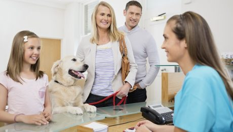 Where To Turn If You Can't Afford Veterinary Care For Your Dog