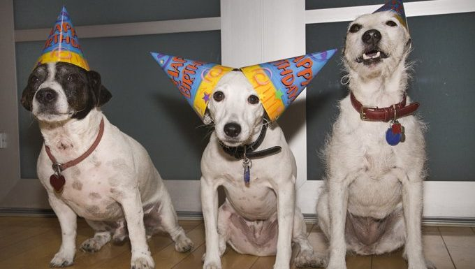 birthday dogs celebrating dogust