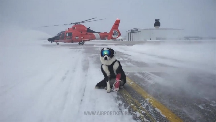 Piper stands on a snowy runway in front of a helicopter