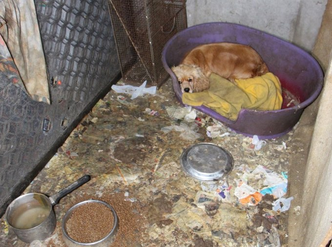 Desperate Puppy Mill Mom Hides Puppies In Wall - Dogtime